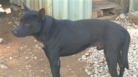 ▲俄羅斯的流浪犬逃過被撲殺的命運。(示意圖/記者林辰彥攝影)