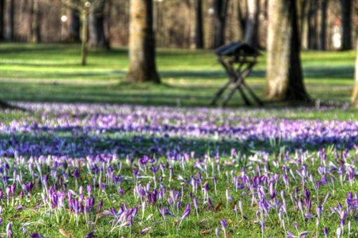 春天-旅遊德國的最佳時機 圖/業者提供