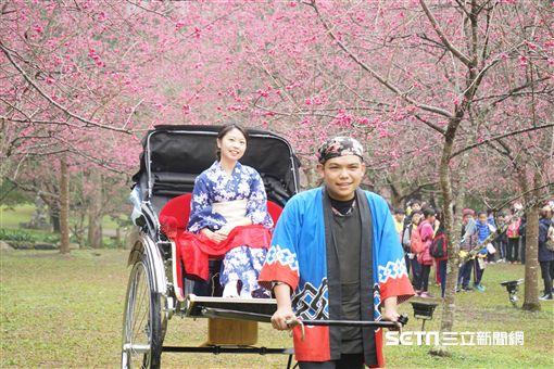 九族櫻花祭,人力車。(圖/九族文化村提供)
