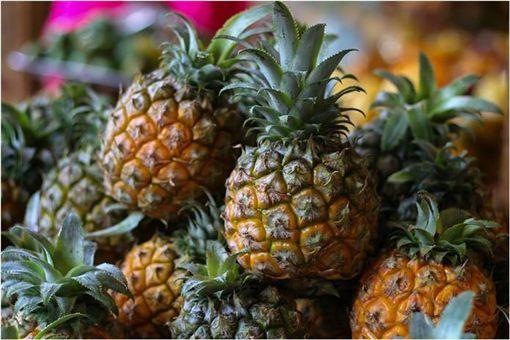 鳳梨,毒品,古柯鹼,水果,西班牙,葡萄牙,走私 圖/翻攝自YouTube