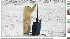 俄羅斯弗蘭格爾島(Wrangel Island)北極熊把玩裝置像自拍(圖/翻攝自《西伯利亞時報》)