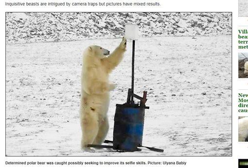 俄羅斯弗蘭格爾島(Wrangel Island)北極熊把玩裝配像自拍(圖/翻攝自《西伯利亞時報》)