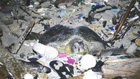 生態,浩劫,海龜,產卵,垃圾堆,澳大利亞,聖誕島,劉烘昌,BBC earth 圖/翻攝自BBC earth臉書