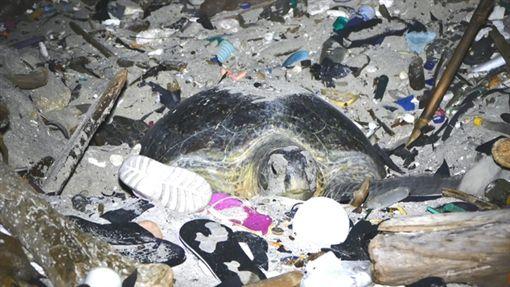 生態,浩劫,海龜,產卵,垃圾堆,澳大利亞,聖誕島,劉烘昌,BBC earth 圖/翻攝自BBC earth臉書 ID-1220592