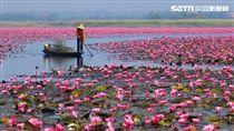 泰國,旅遊,紅蓮花,湖泊。(圖/泰觀局提供)
