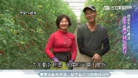 番茄夫妻突患病 抗癌路吃出健康人生
