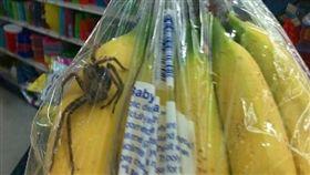 買香蕉竟然送「毒蜘蛛」 圖/翻攝自hmns.org http://blog.hmns.org/2015/10/a-spider-in-your-fruit-unlikely-and-less-likely-to-hurt-you/