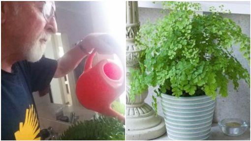 癌妻生前叫丈夫每天幫盆栽澆水 丈夫4年後才發現是「塑膠品」/Antonia Nicol twitter