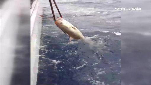 搏鬥深海巨怪 男釣起103台斤超大尾紅魽|三立新聞台