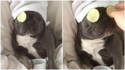 比人還享受!法鬥躺床敷黃瓜做美容(圖/翻攝自bluenjy Instagram)