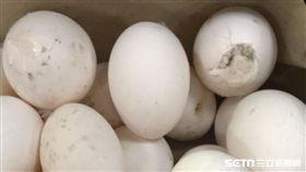爛雞蛋,萇記公司,發霉,長蟲