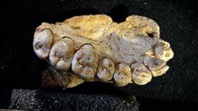 化石,以色列,考古,人類,智人,原始人,遺骸,Israel Hershkovitz,Misliya Cave 圖/翻攝自推特 https://goo.gl/McTLEN