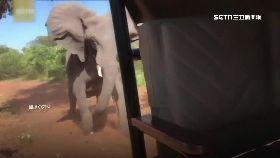 巨象追撞車1200