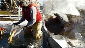 自然,冰凍,魚,食物鏈,瞬間,大魚吃小魚,下雪 圖/翻攝自Daily Picks and Flicks臉書