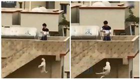 中國大陸廣東一男子在頂樓吊死狗(圖/翻攝自《澎湃新聞》)