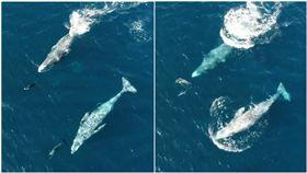 16:9 海豚、鯨魚伴游大海 網友看到醉:好像爸媽帶小孩出門玩~ 合成圖/翻攝自dolphinsafaridom IG https://www.instagram.com/p/BeeQPAyF1_x/