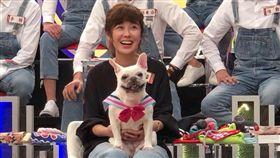 李維維愛犬。(圖/翻攝自李維維 Vivi Lee臉書)