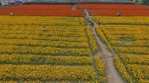 杉林區公所打造向日葵迷宮。(圖/翻攝自高雄市杉林區公所FB)