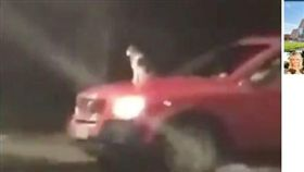 貓,引擎蓋,兜風,車/(圖/翻攝自OregonLive)