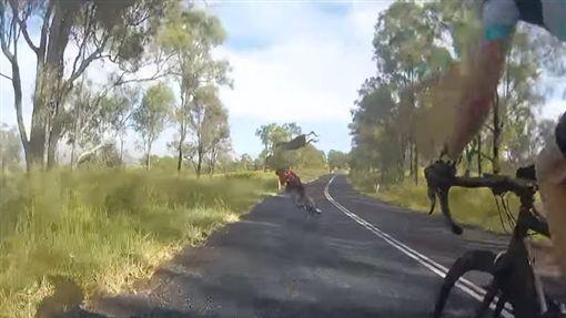 澳洲,昆士蘭,袋鼠,踹飛(圖/翻攝自YouTube)