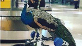 美國旅客幫寵物買機位,慘遭航空公司拒絕。(圖/翻攝自dexterthepeacock IG)