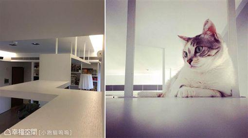 名家專用/幸福空間/寵物達人:關於寵物宅的18個超適用裝修密技(勿用)