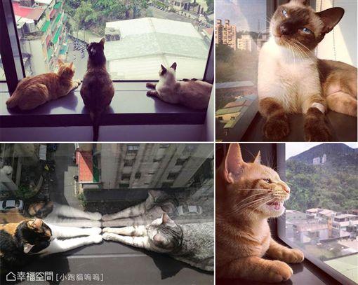 名家專用/幸福空間/寵物達人:關於寵物宅的18個超實用裝修密技(勿用)
