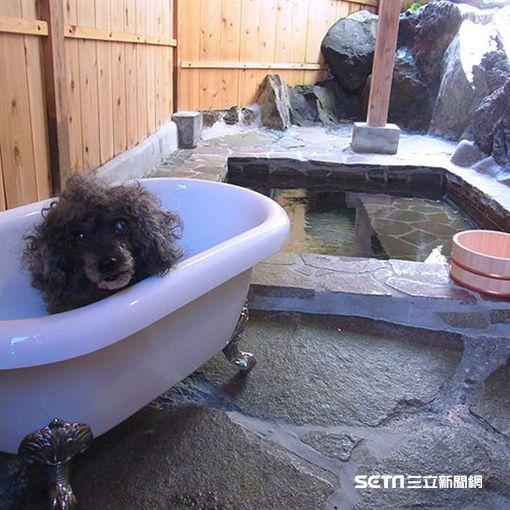 日本十大寵物友善旅宿。(圖/樂天旅遊提供)