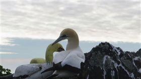 世上最孤獨鳥離世 愛護「水泥女伴」至死不渝