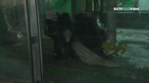 猩猩喝薑湯1200