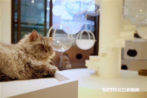 貓的糊口提案,貓咖啡廳,小貓,貓咪。(圖/記者簡佑庭攝)