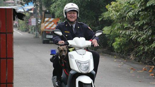 台南,善化,霸王,警犬,流浪犬,領養,NHK(圖/翻攝畫面)