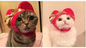 貓咪,貓頭套,紅心,愛心,情人節,寵物,喵星人,日本 圖/翻攝自@mochi_syobo、@kitan_club Twitter