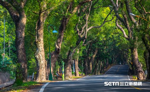 《演習曲》名導演陳懷恩,南投集集綠色隧道。(圖/滿漢大餐提供)