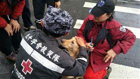 花蓮雲門翠堤社區救出毛小孩。(圖/翻攝自中華民國紅十字會臉書)