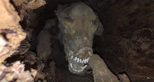 美國喬治亞州的博物館「南方森林世界」(Southern Forest World),收藏一具「木乃伊獵犬」困在橡樹樹幹內的展示品,大受遊客歡迎。有專家指出,狗狗是被困在樹中活活餓死,因為樹幹內的特殊環境,才會變成乾屍。(圖/翻攝自YouTube《TheDailyWoo》)