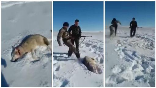 哈薩克,野狼遭獵人開槍攻擊後睜開還擊(圖/翻攝自YouTube)