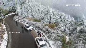 合歡雪35CM1800