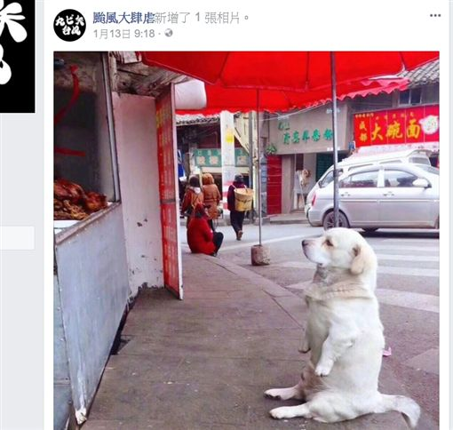 餓了啦~白茸茸狗狗眼神果斷 默坐燒臘店前討食。(圖/擷取自颱風大舉虐臉書粉絲團)