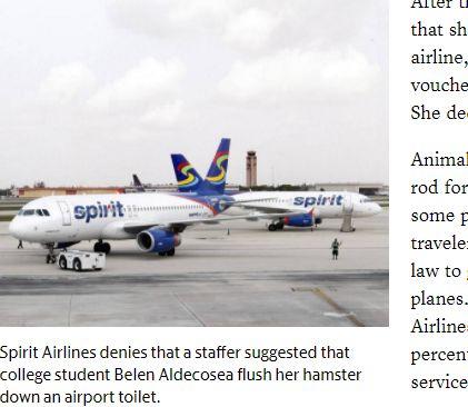 美國,廉航,倉鼠,佛羅里達州,馬桶,放生,登機,囓齒動物(圖/翻攝自Miami Herald)