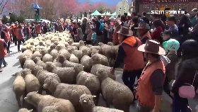 清境奔羊節1200