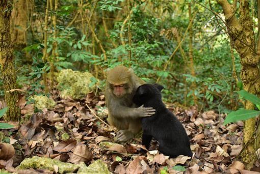獼猴,流浪狗,寵物,高雄,壽山,叢林,種族,親情 圖/翻攝自Jay Lin臉書
