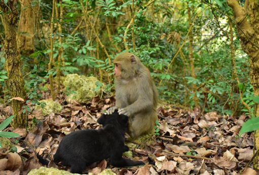 獼猴,飄流狗,寵物,高雄,壽山,森林,種族,親情 圖/翻攝自Jay Lin臉書