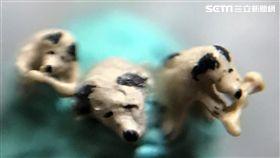 毫芒雕刻家陳逢顯,再度創作出高0.1公分的世界最小毫芒雕刻小狗,讓人看了讚嘆不已(陳逢顯提供)