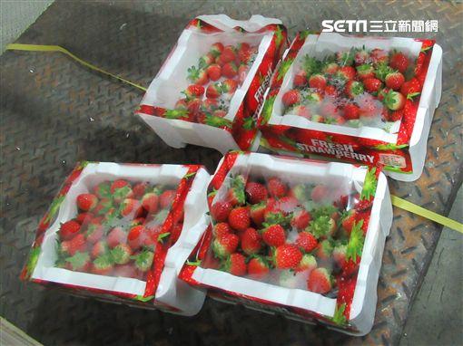 印度出口「TEESTA VALLEY EXPORTS LTD伯爵茶(EARL GREY TEA IN NYLON TEA BAG)」檢出殘留農藥含量不符規定圖/食藥署韓國出口「JOON INTERNATIONAL草莓(FRESH STRAWBERRIES)」檢出殘留農藥含量不符規定