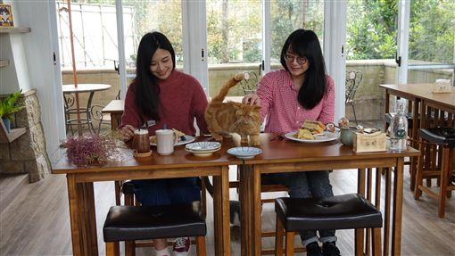 飯店級貓餐廳開幕,東森山林成寵物渡假勝地