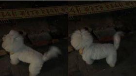 寵物,狗,牽繩,毛孩,腳印,水泥,工地 圖/翻攝爆料公社