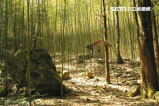 過年,連假,林務局,國家叢林遊樂區,平地森林園區,林業文化園區,生態教育館,天然步道