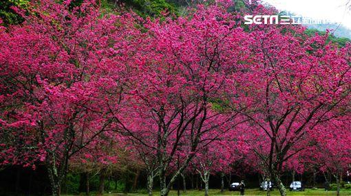 過年,連假,林務局,國家森林遊樂區,平地森林園區,林業文化園區,生態教育館,自然步道