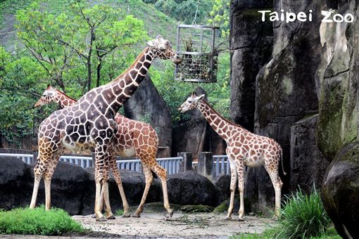 動物園,情人節,小年夜,過年,台北市立動物園,西洋情人節